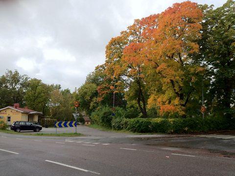 2012-10-02-Leaves.jpg