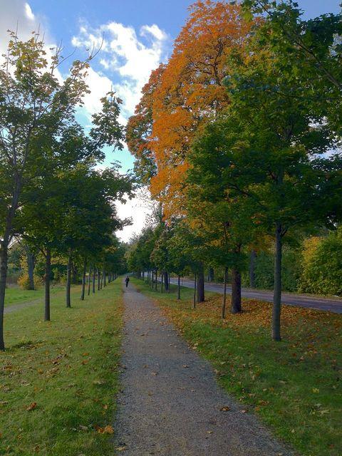 2012-10-05-path.jpg