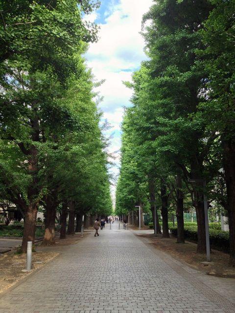 2013-05-02-IchouNamiki.jpg